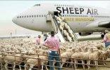 sheep_41e54fe5b975107788be857c97e999fddfd888a8.jpg